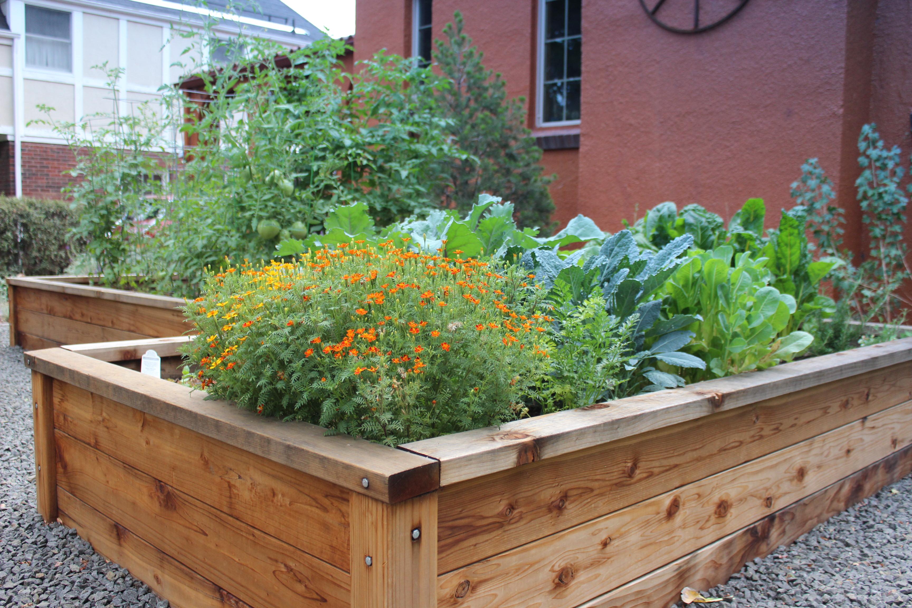 Veggie garden landscape denver water veggie garden veggie garden workwithnaturefo