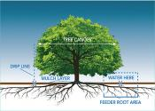 Tree and roots diagram.