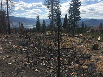 Aftermath of Buffalo Fire near Dillon Reservoir
