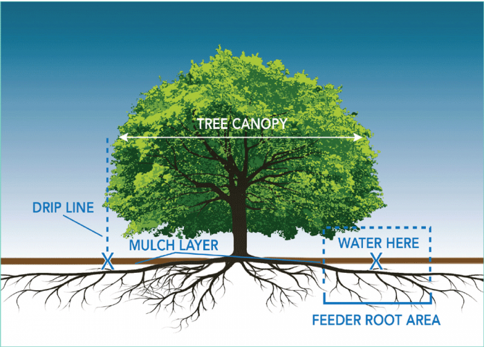 Tree care guide