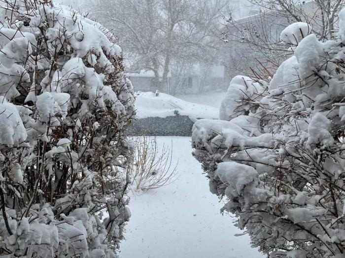 A snow-covered path between two bushes leads to a snow-covered car.