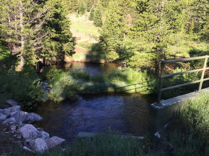 A stream flows through a green forest.