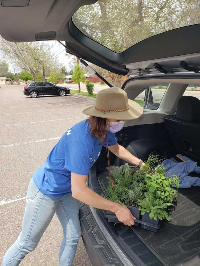 A woman in a hat and mask loads a flat of plants into the back of a car.