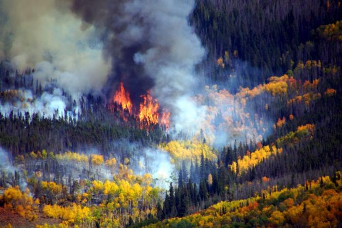 Ptarmigan Fire burns through the forest