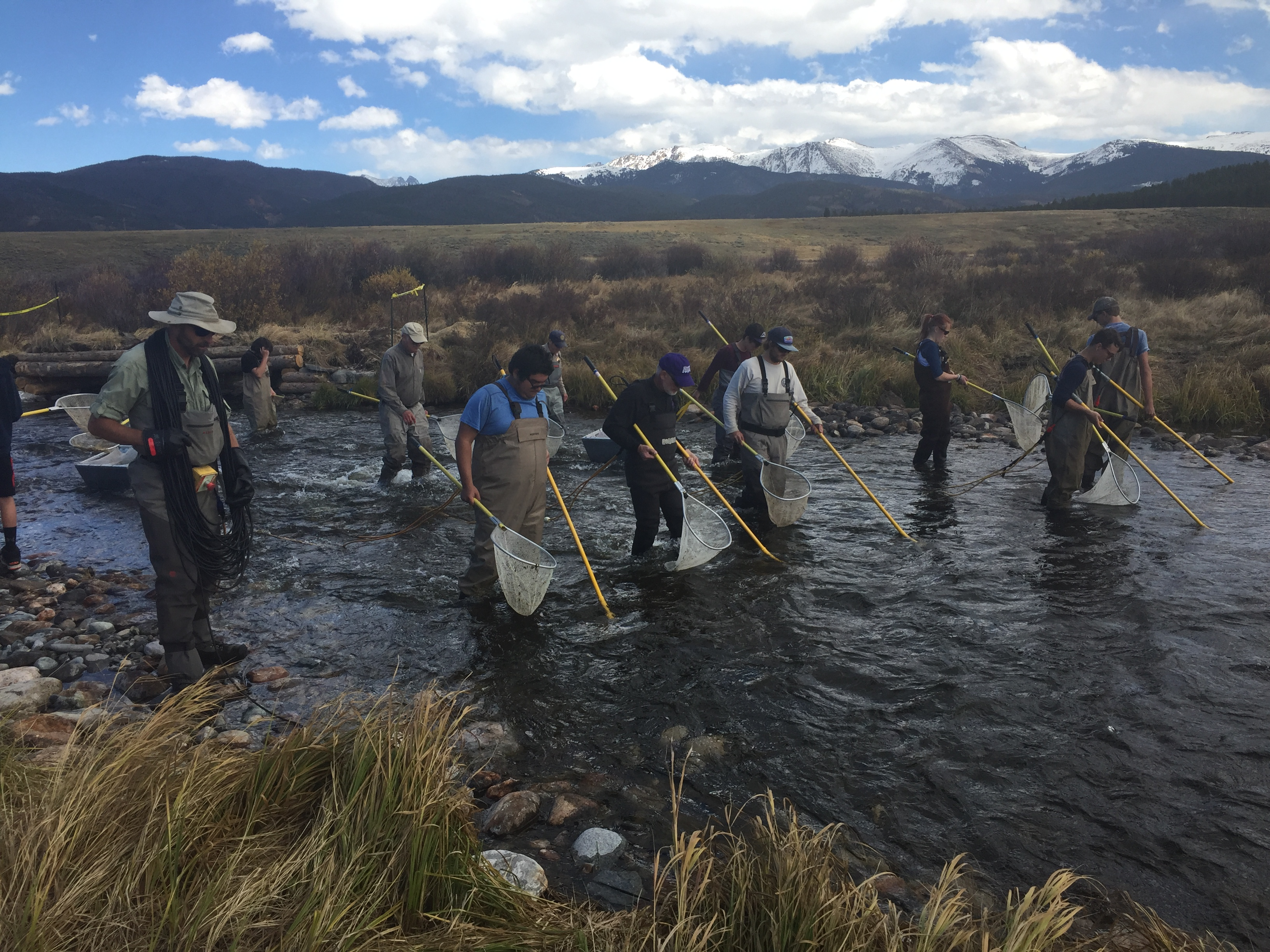 Colorado Parks and Wildlife conducted a survey of the trout population in the Fraser Flats section of the Fraser River on Oct. 5, 2017.