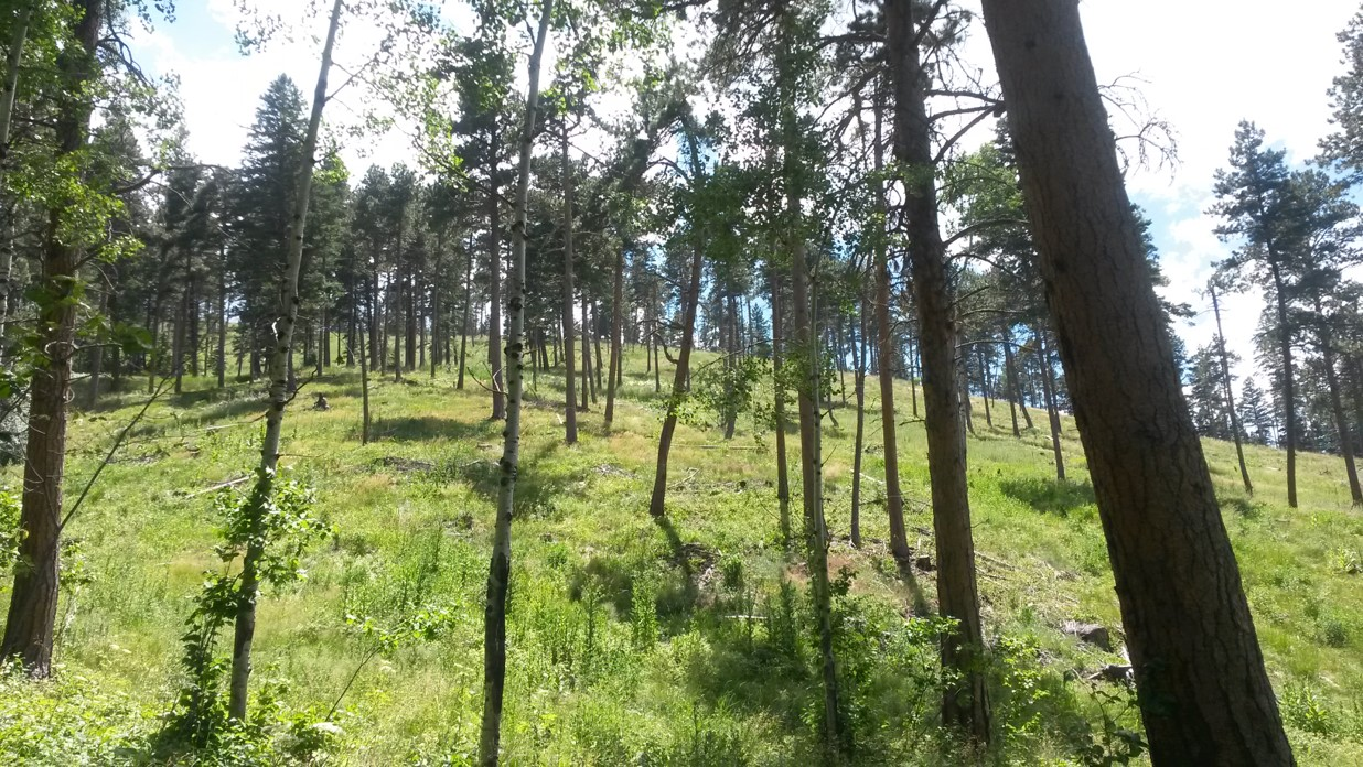 This restored Ponderosa Pine forest is just one success story of the From Forests to Faucets program.